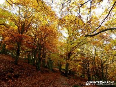 Castañar de El Tiemblo - Pozo de la Nieve - ruta de senderismo en Ávila, excursión organizada